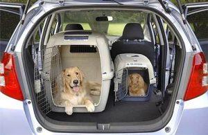 transporter-dos-perros